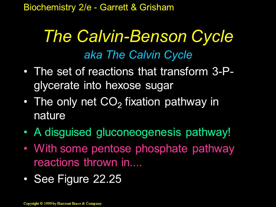 Biochemistry 2/e - Garrett & Grisham Copyright © 1999 by Harcourt Brace & Company The Calvin-Benson Cycle aka The Calvin Cycle The set of reactions that transform 3-P- glycerate into hexose sugar The only net CO 2 fixation pathway in nature A disguised gluconeogenesis pathway.
