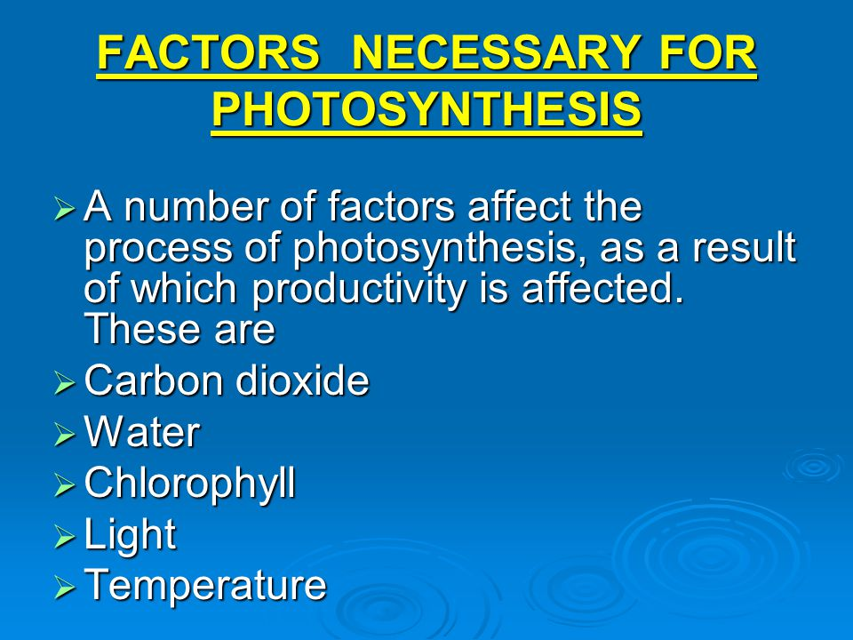 FACTORS NECESSARY FOR PHOTOSYNTHESIS  A number of factors affect the process of photosynthesis, as a result of which productivity is affected. These
