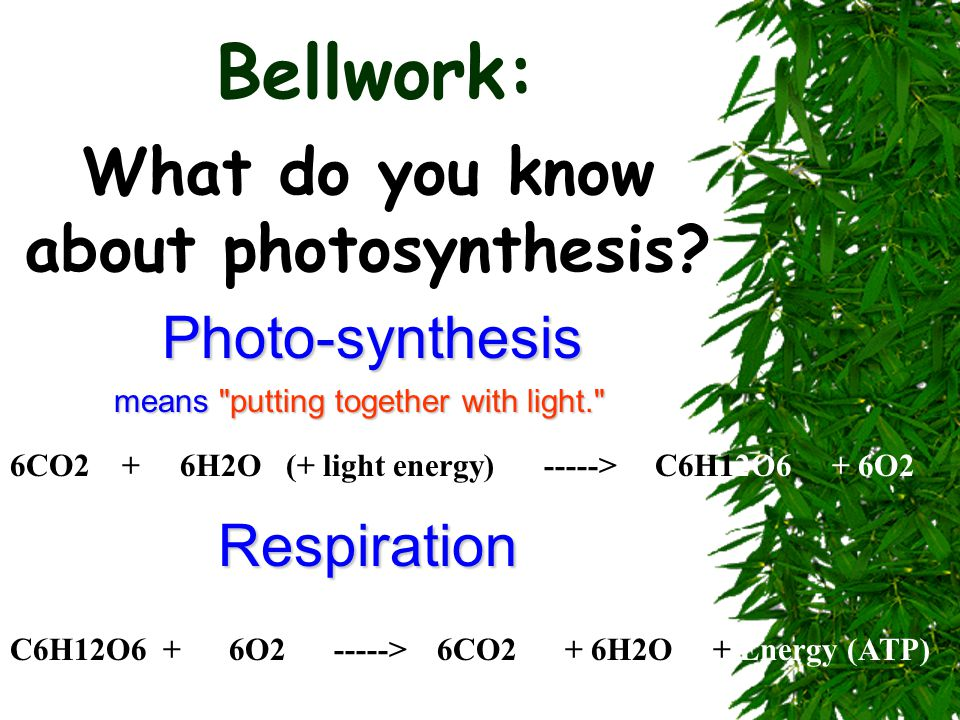 Bellwork: What do you know about photosynthesis? Photo-synthesis means