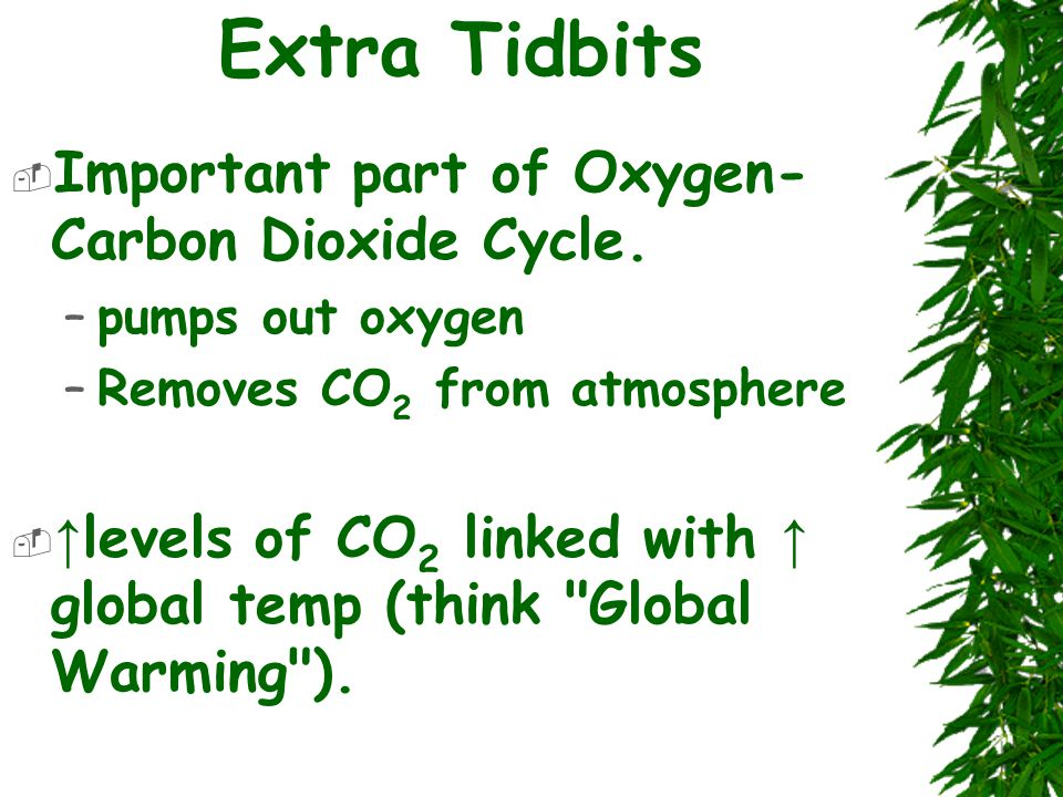 Extra Tidbits  Important part of Oxygen- Carbon Dioxide Cycle.