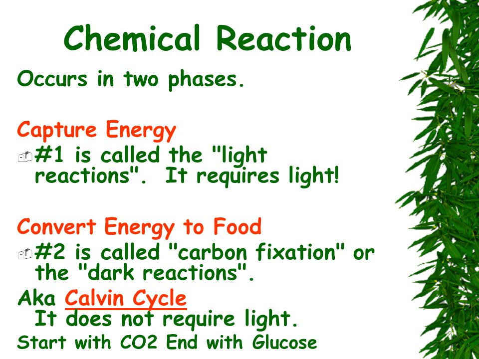 Chemical Reaction Occurs in two phases. Capture Energy  #1 is called the light reactions .