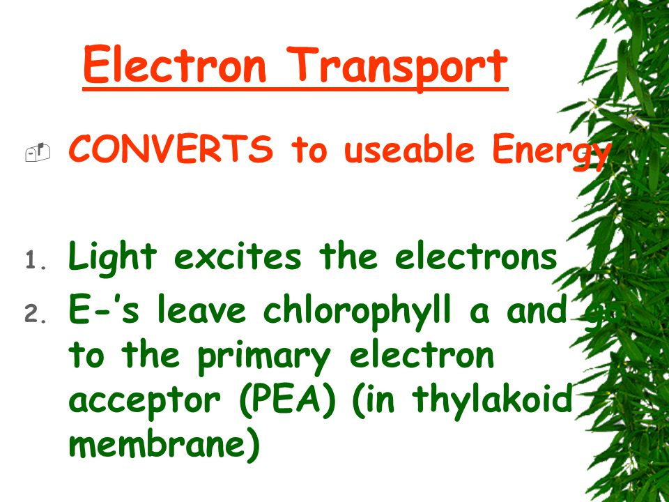 Electron Transport  CONVERTS to useable Energy 1.
