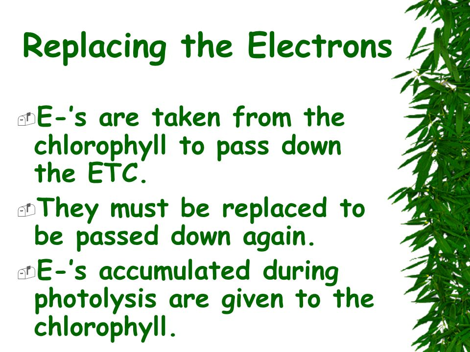Replacing the Electrons  E-'s are taken from the chlorophyll to pass down the ETC.