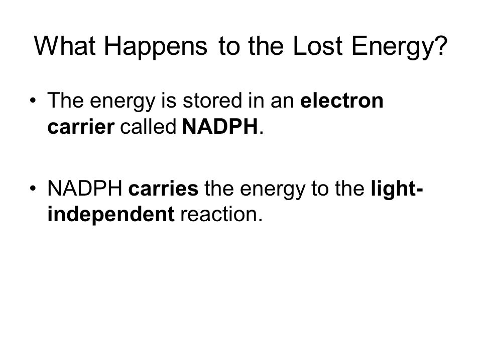 What Happens to the Lost Energy.The energy is stored in an electron carrier called NADPH.