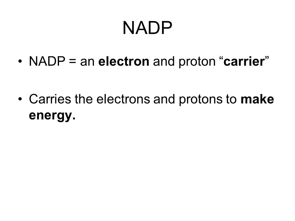 NADP NADP = an electron and proton carrier Carries the electrons and protons to make energy.