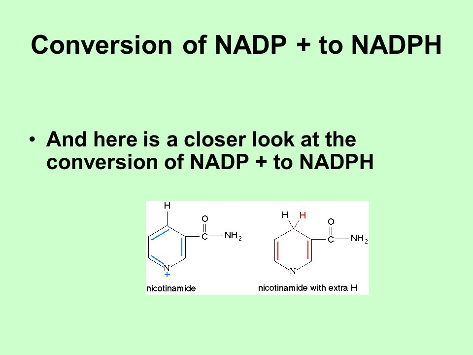 Conversion of NADP + to NADPH And here is a closer look at the conversion of NADP + to NADPH