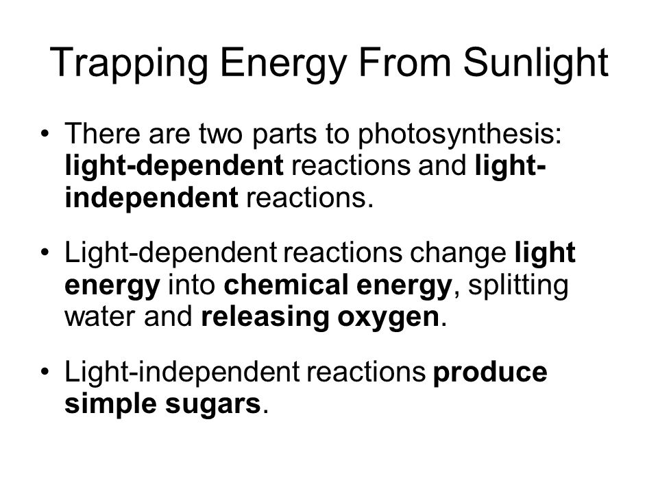 Trapping Energy From Sunlight There are two parts to photosynthesis: light-dependent reactions and light- independent reactions.