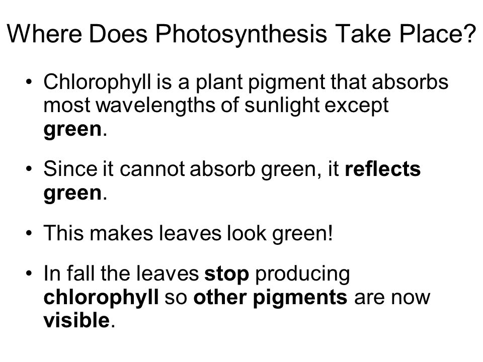 Where Does Photosynthesis Take Place.