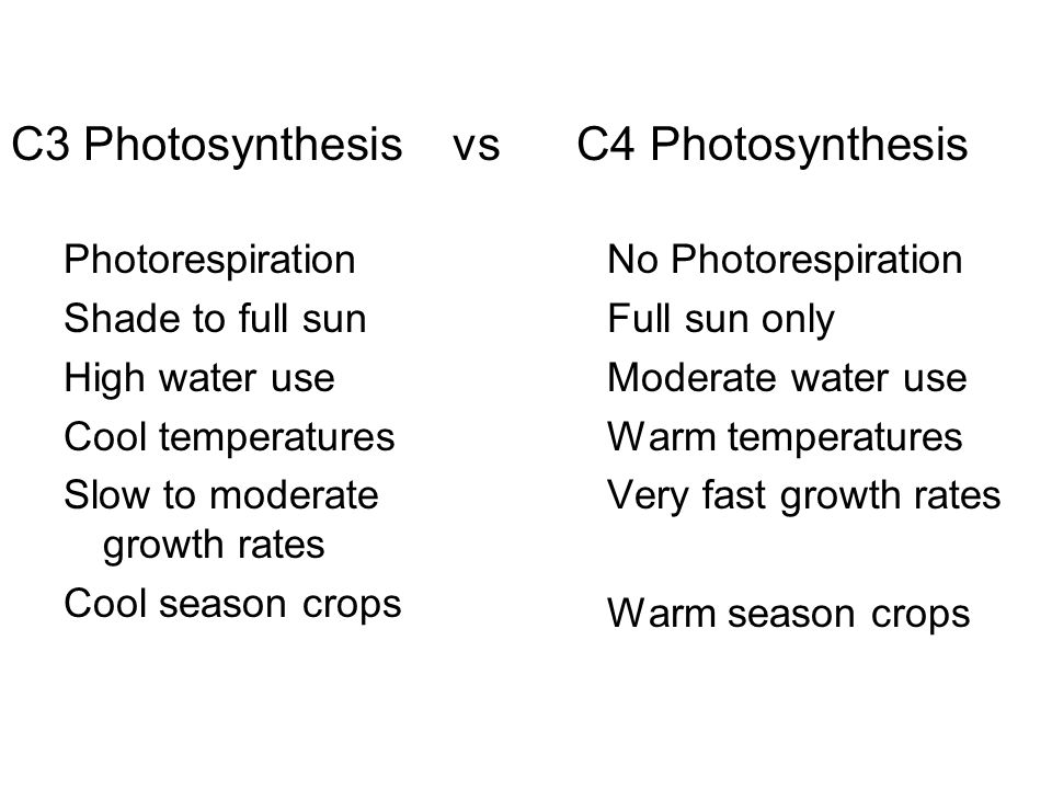 C3 Photosynthesis vs C4 Photosynthesis Photorespiration Shade to full sun High water use Cool temperatures Slow to moderate growth rates Cool season crops No Photorespiration Full sun only Moderate water use Warm temperatures Very fast growth rates Warm season crops