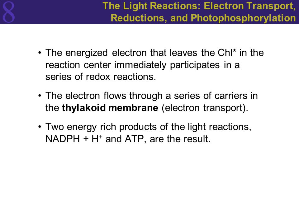 8 The Light Reactions: Electron Transport, Reductions, and Photophosphorylation The energized electron that leaves the Chl* in the reaction center imm