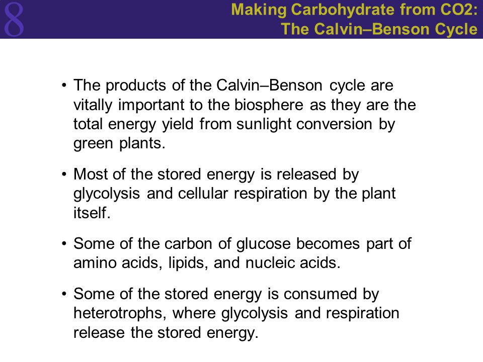 8 Making Carbohydrate from CO2: The Calvin–Benson Cycle The products of the Calvin–Benson cycle are vitally important to the biosphere as they are the