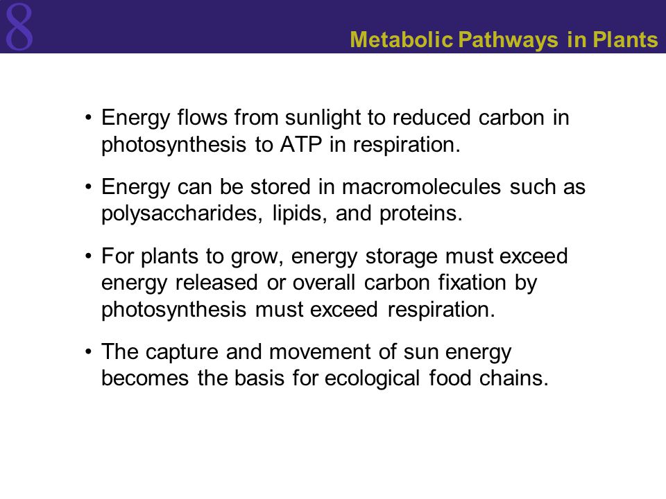 8 Metabolic Pathways in Plants Energy flows from sunlight to reduced carbon in photosynthesis to ATP in respiration. Energy can be stored in macromole