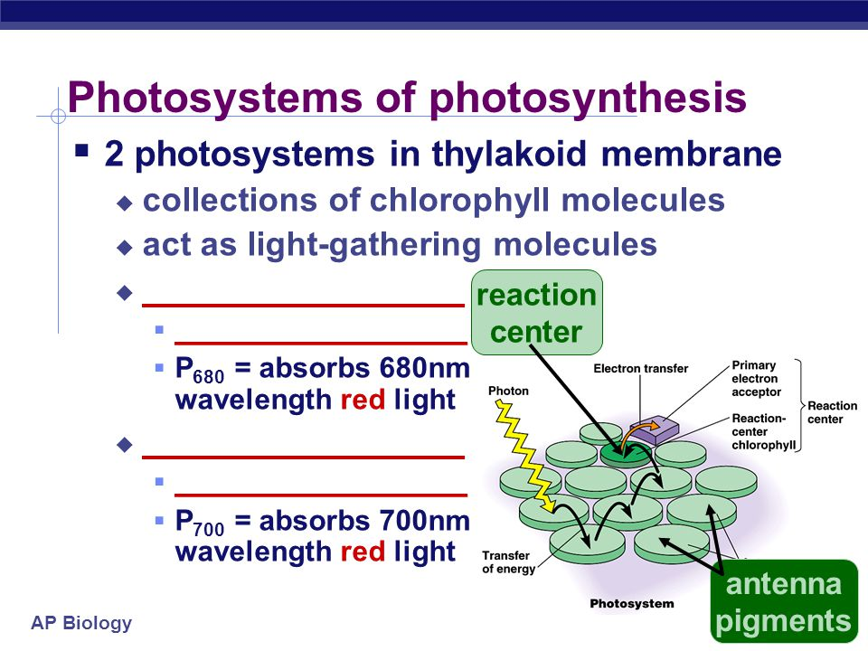 AP Biology Light: absorption spectra  Photosynthesis gets energy by absorbing wavelengths of light  _______________________  absorbs best in red &