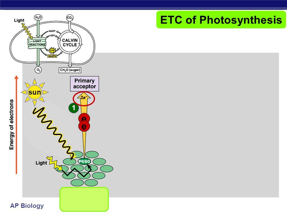 AP Biology ETC of Photosynthesis ______________ chlorophyll a chlorophyll b