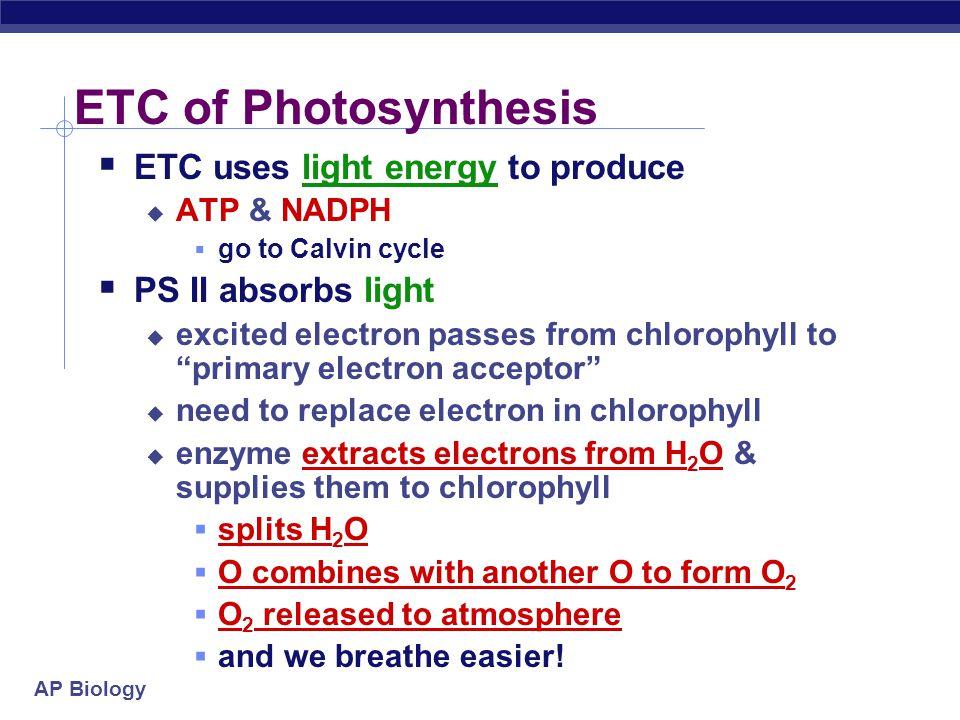 AP Biology split H 2 O ETC of Photosynthesis sun O ATP H+H+ H+H+ H+H+ H+H+ H+H+ H+H+ H+H+ H+H+ H+H+ H+H+ H+H+ e e e e