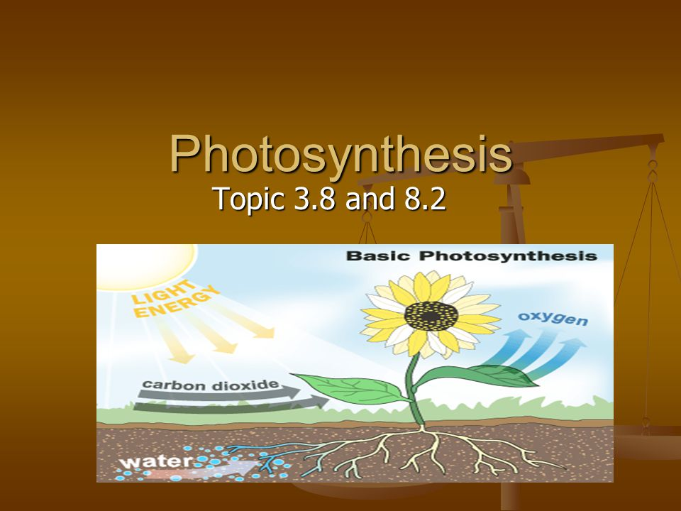 Photosynthesis Topic 3.8 and 8.2
