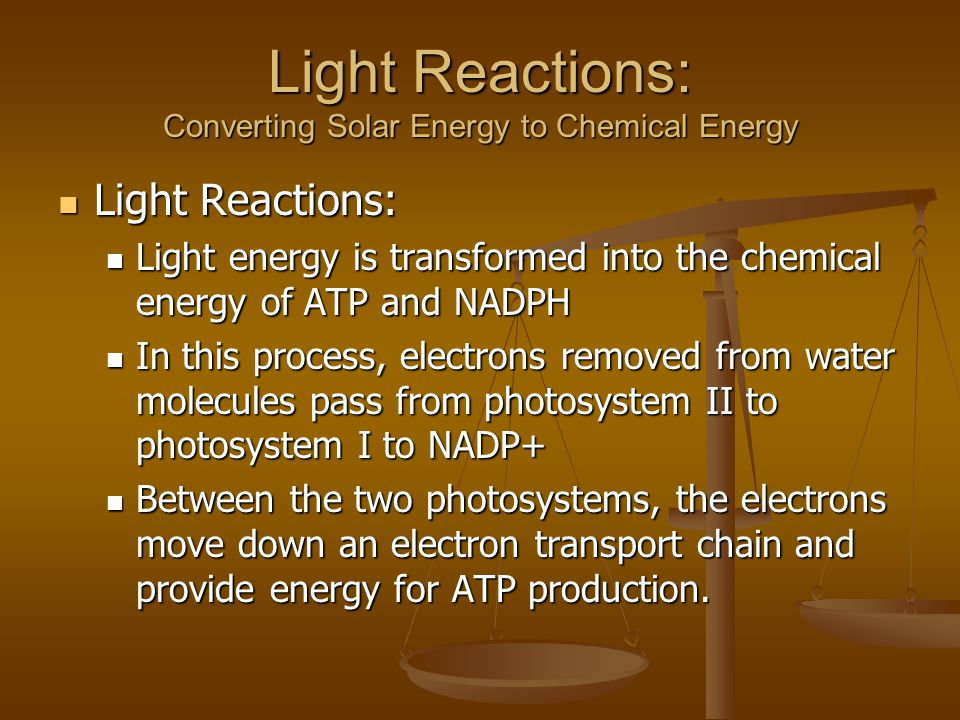 Light Reactions: Light Reactions: Light energy is transformed into the chemical energy of ATP and NADPH Light energy is transformed into the chemical energy of ATP and NADPH In this process, electrons removed from water molecules pass from photosystem II to photosystem I to NADP+ In this process, electrons removed from water molecules pass from photosystem II to photosystem I to NADP+ Between the two photosystems, the electrons move down an electron transport chain and provide energy for ATP production.