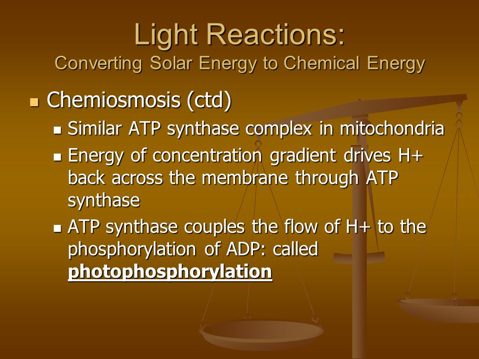 Light Reactions: Converting Solar Energy to Chemical Energy Chemiosmosis (ctd) Chemiosmosis (ctd) Similar ATP synthase complex in mitochondria Similar ATP synthase complex in mitochondria Energy of concentration gradient drives H+ back across the membrane through ATP synthase Energy of concentration gradient drives H+ back across the membrane through ATP synthase ATP synthase couples the flow of H+ to the phosphorylation of ADP: called photophosphorylation ATP synthase couples the flow of H+ to the phosphorylation of ADP: called photophosphorylation