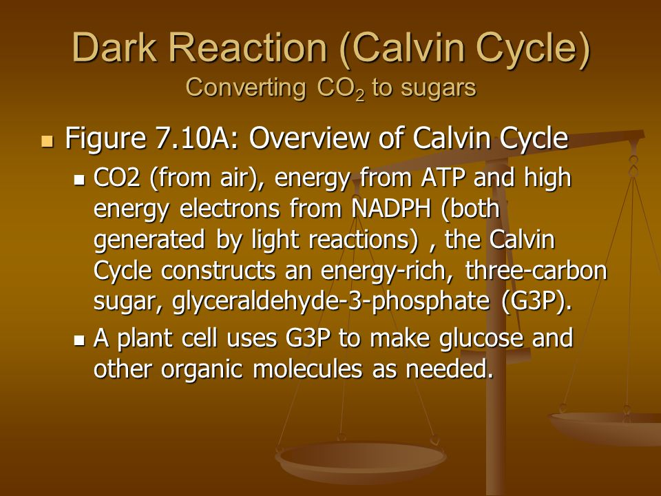 Dark Reaction (Calvin Cycle) Converting CO 2 to sugars Figure 7.10A: Overview of Calvin Cycle Figure 7.10A: Overview of Calvin Cycle CO2 (from air), energy from ATP and high energy electrons from NADPH (both generated by light reactions), the Calvin Cycle constructs an energy-rich, three-carbon sugar, glyceraldehyde-3-phosphate (G3P).