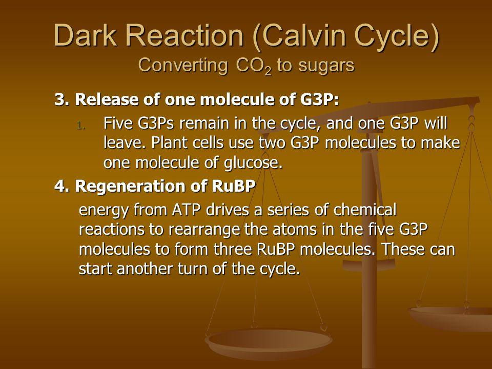 Dark Reaction (Calvin Cycle) Converting CO 2 to sugars 3.