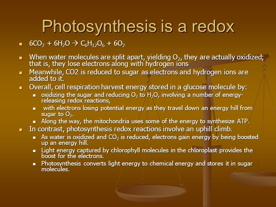 Photosynthesis is a redox 6CO 2 + 6H 2 O  C 6 H 12 O 6 + 6O 2 6CO 2 + 6H 2 O  C 6 H 12 O 6 + 6O 2 When water molecules are split apart, yielding O 2, they are actually oxidized; that is, they lose electrons along with hydrogen ions When water molecules are split apart, yielding O 2, they are actually oxidized; that is, they lose electrons along with hydrogen ions Meanwhile, CO2 is reduced to sugar as electrons and hydrogen ions are added to it.
