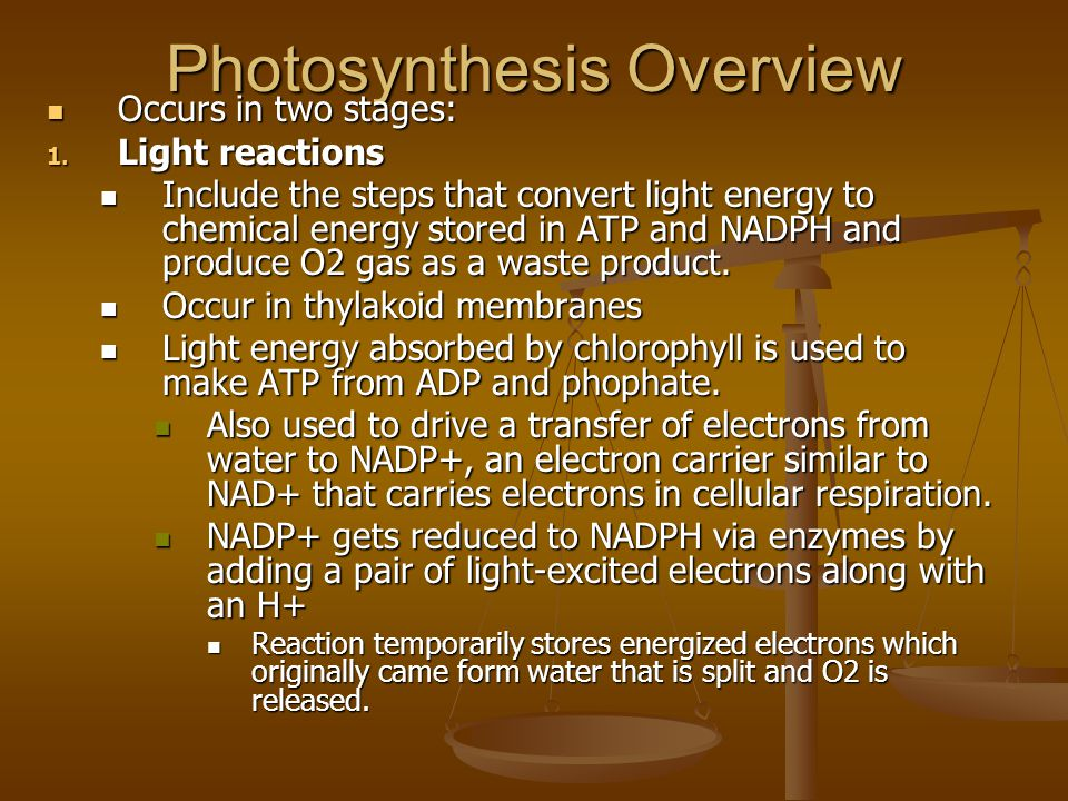 Photosynthesis Overview Occurs in two stages: Occurs in two stages: 1.