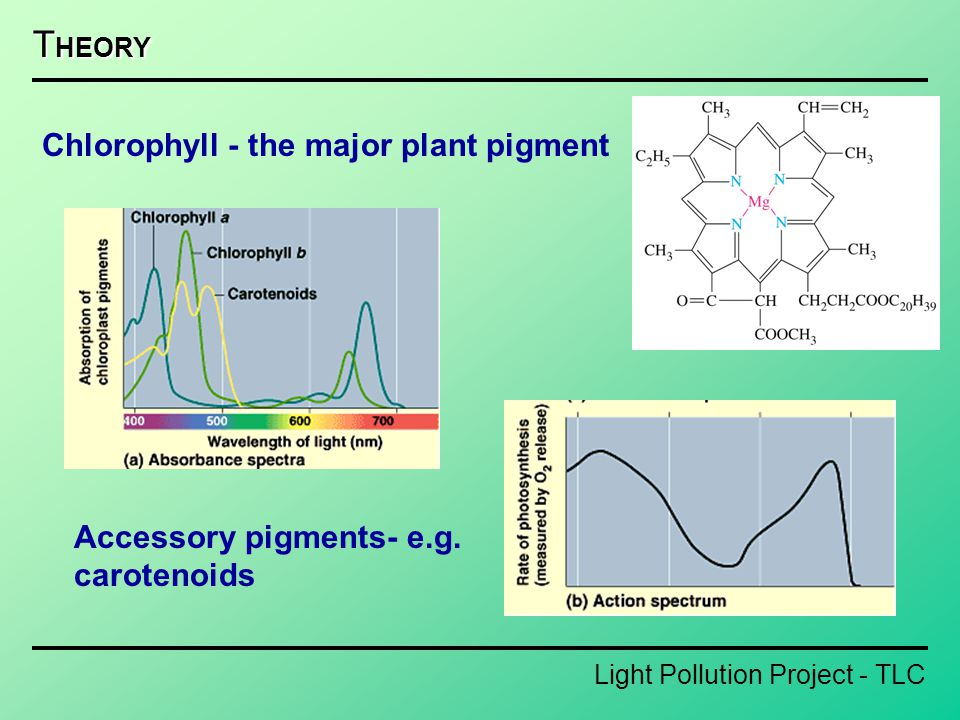 Light Pollution Project - TLC T HEORY Chlorophyll - the major plant pigment Accessory pigments- e.g. carotenoids
