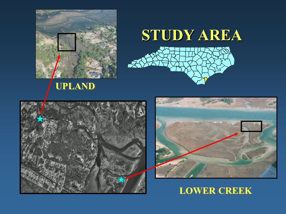 STUDY AREA UPLAND LOWER CREEK