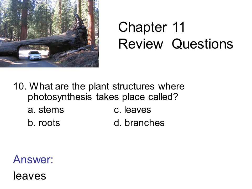 10. What are the plant structures where photosynthesis takes place called.
