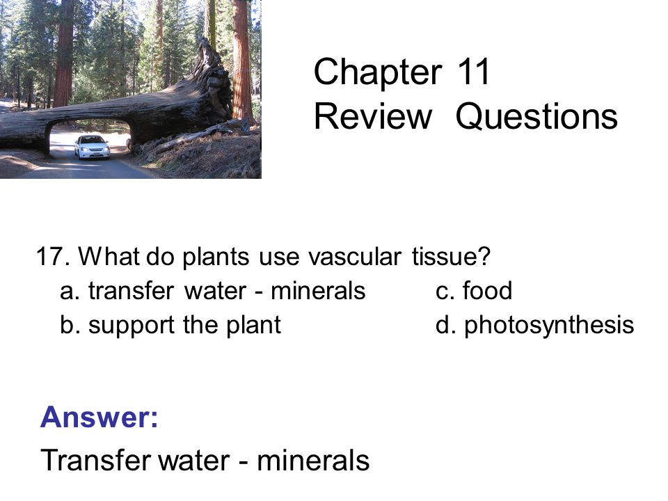 17. What do plants use vascular tissue. a. transfer water - mineralsc.