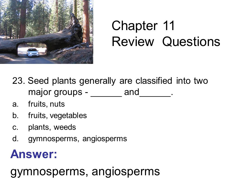 23. Seed plants generally are classified into two major groups - ______ and______.
