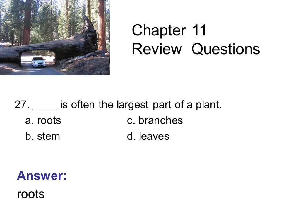 27. ____ is often the largest part of a plant. a.