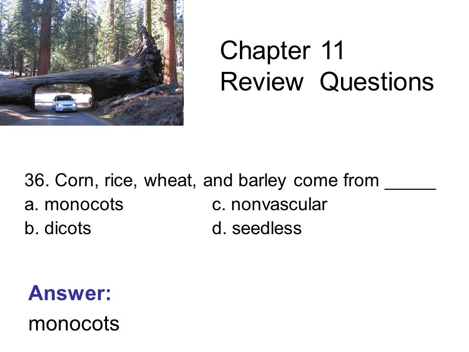 36. Corn, rice, wheat, and barley come from _____ a.