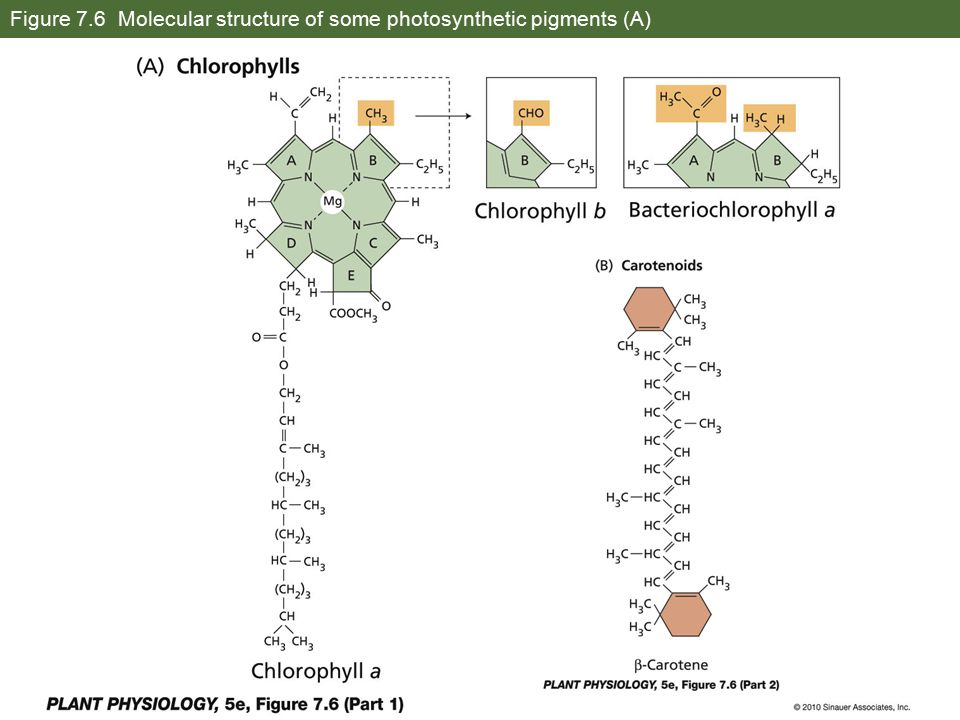 Figure 7.6 Molecular structure of some photosynthetic pigments (A)