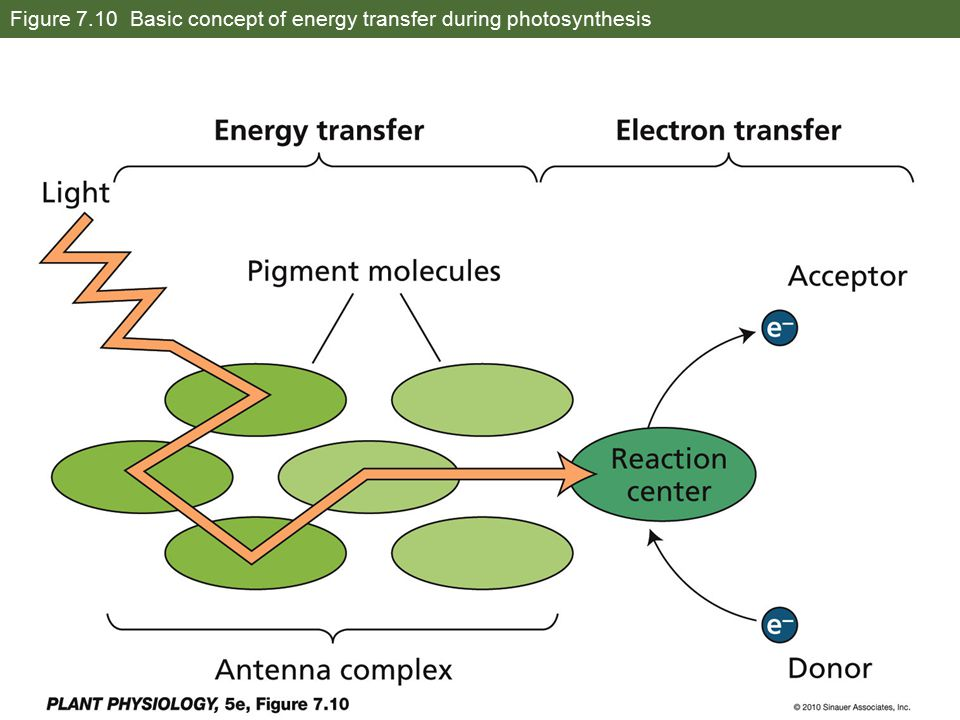 Figure 7.10 Basic concept of energy transfer during photosynthesis