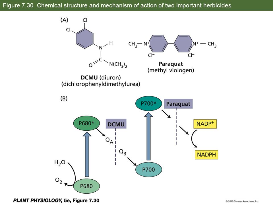 Figure 7.30 Chemical structure and mechanism of action of two important herbicides