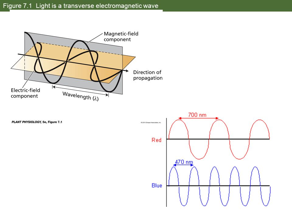Figure 7.1 Light is a transverse electromagnetic wave