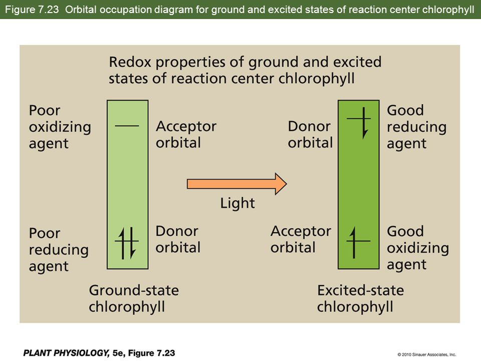 Figure 7.23 Orbital occupation diagram for ground and excited states of reaction center chlorophyll