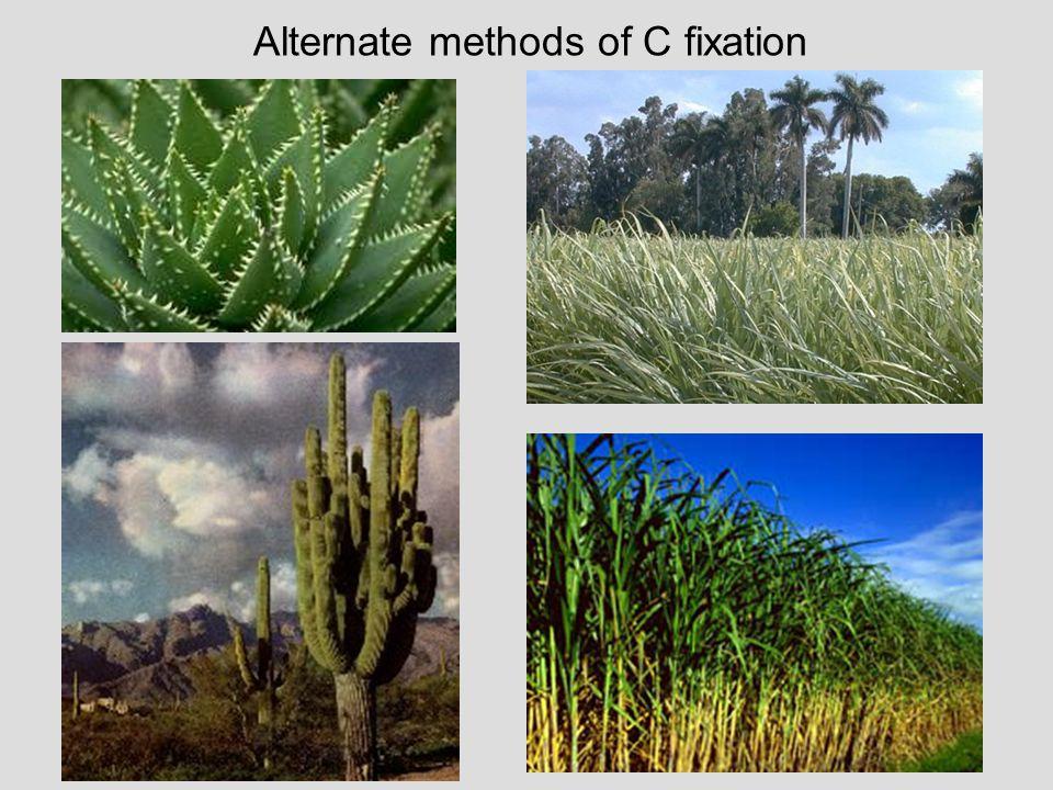 Alternate methods of C fixation