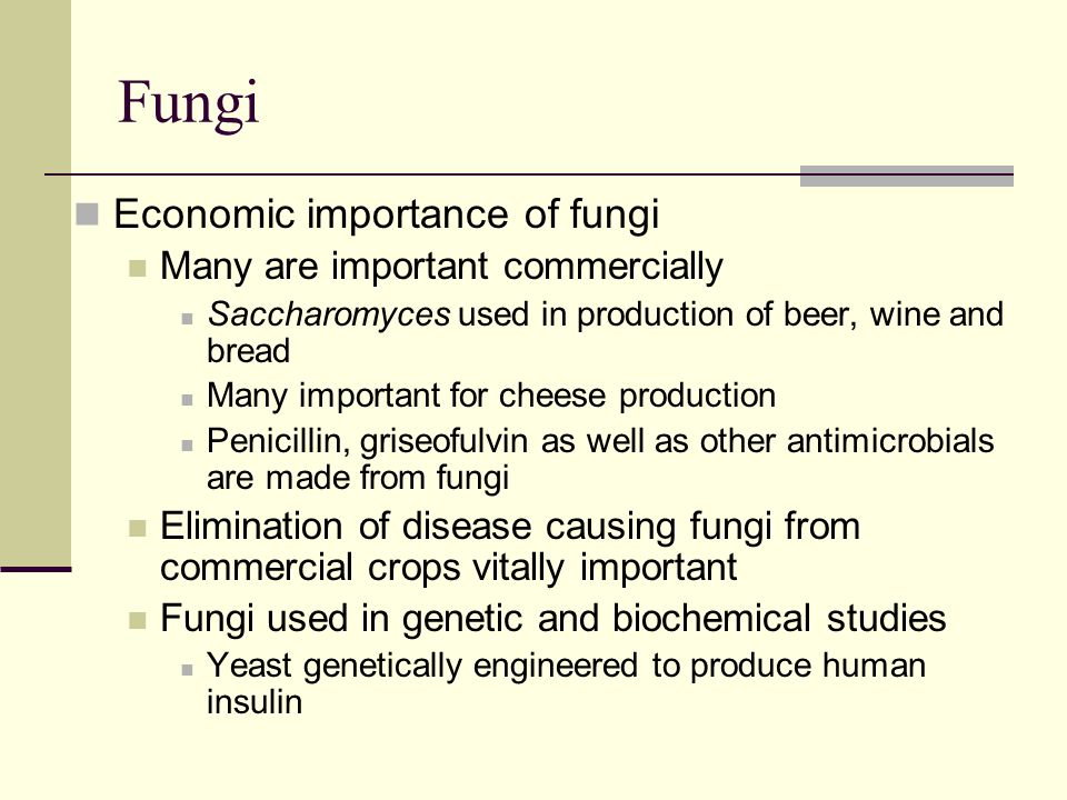 Fungi Economic importance of fungi Many are important commercially Saccharomyces used in production of beer, wine and bread Many important for cheese