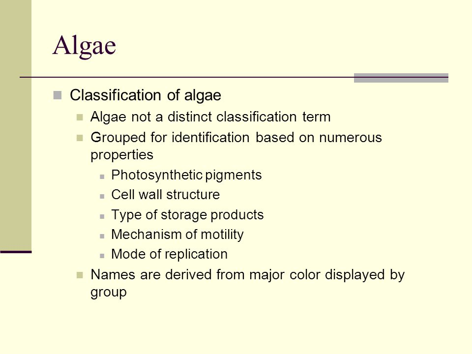 Algae Classification of algae Algae not a distinct classification term Grouped for identification based on numerous properties Photosynthetic pigments