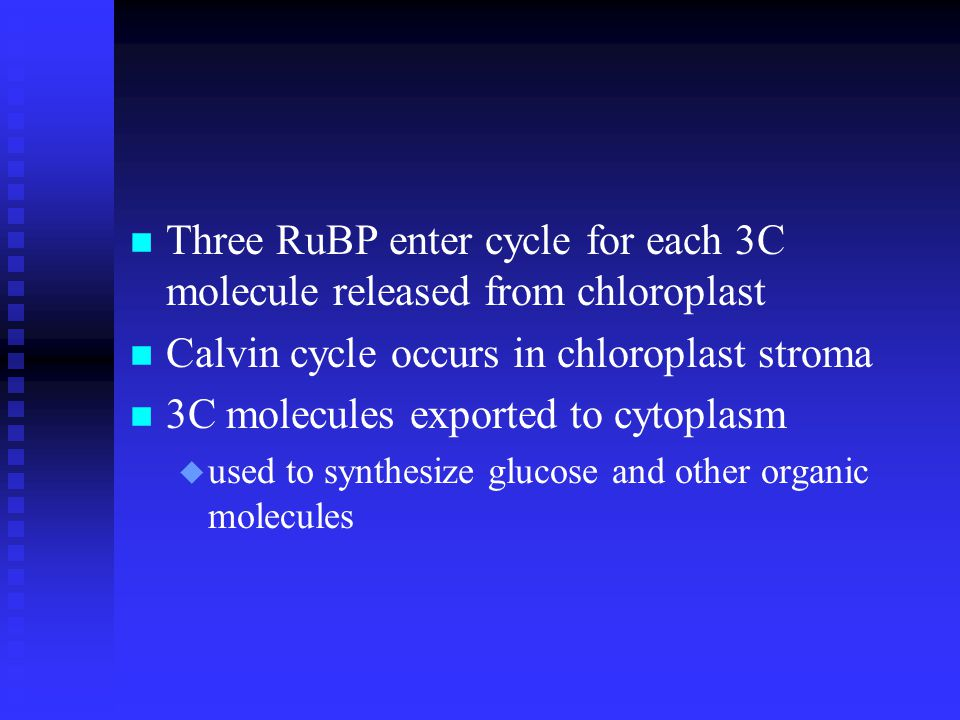 n Three RuBP enter cycle for each 3C molecule released from chloroplast n Calvin cycle occurs in chloroplast stroma n 3C molecules exported to cytoplasm u used to synthesize glucose and other organic molecules