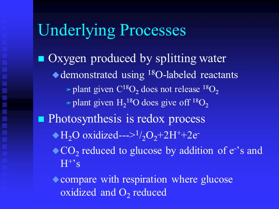 Underlying Processes n Oxygen produced by splitting water u demonstrated using 18 O-labeled reactants F plant given C 18 O 2 does not release 18 O 2 F plant given H 2 18 O does give off 18 O 2 n Photosynthesis is redox process u H 2 O oxidized---> 1 / 2 O 2 +2H + +2e - u CO 2 reduced to glucose by addition of e - 's and H + 's u compare with respiration where glucose oxidized and O 2 reduced