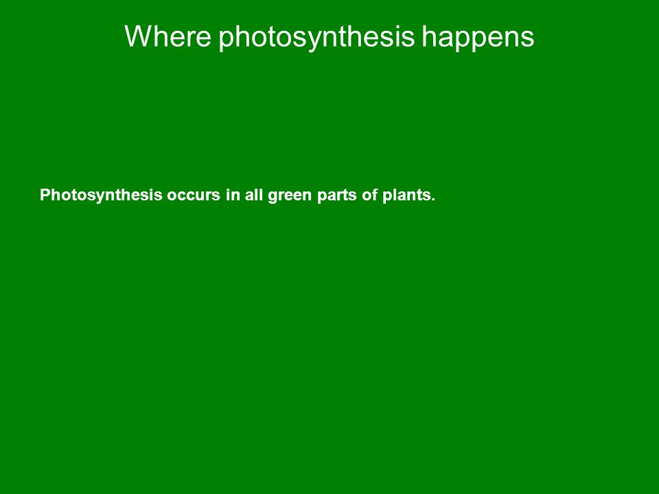 Where photosynthesis happens Photosynthesis occurs in all green parts of plants.