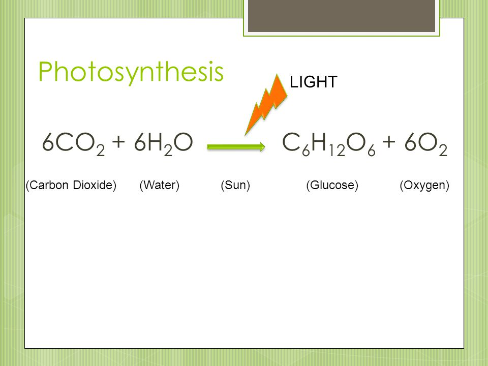 Photosynthesis 6CO 2 + 6H 2 O C 6 H 12 O 6 + 6O 2 LIGHT (Carbon Dioxide)(Water)(Sun)(Glucose)(Oxygen)