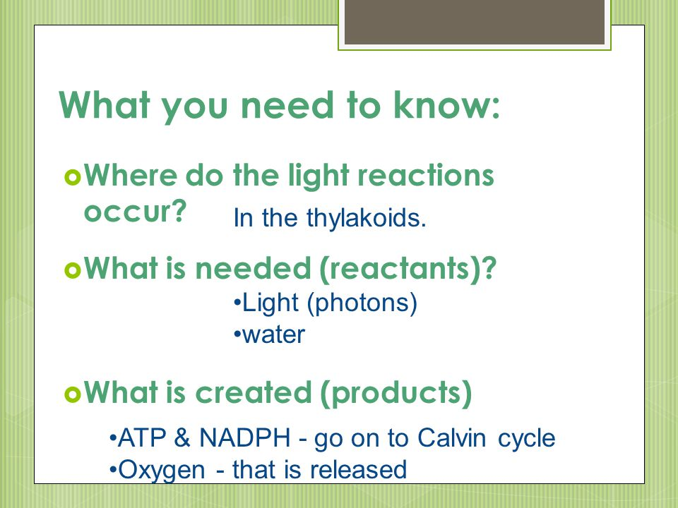 What you need to know:  Where do the light reactions occur?  What is needed (reactants)?  What is created (products) In the thylakoids. Light (phot