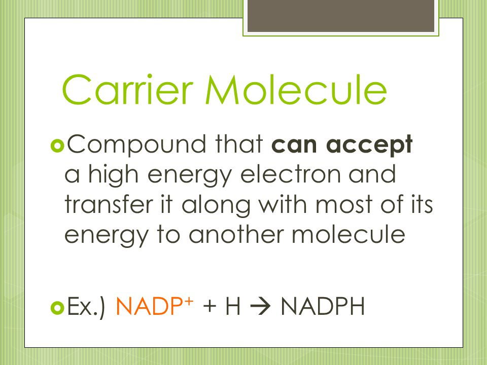 Carrier Molecule  Compound that can accept a high energy electron and transfer it along with most of its energy to another molecule  Ex.) NADP + + H
