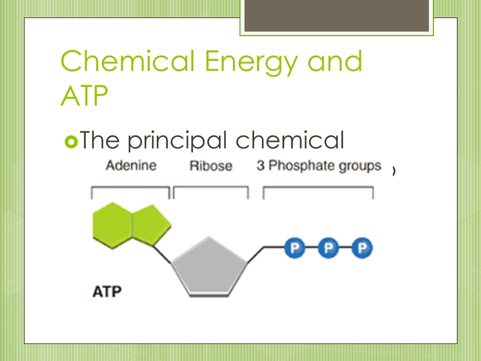Chemical Energy and ATP  The principal chemical compound that cells use to store and release energy is called ATP (adenosine triphosphate)