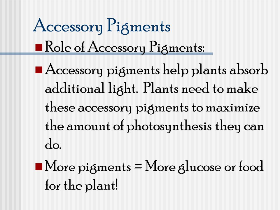 Accessory Pigments Role of Accessory Pigments: Accessory pigments help plants absorb additional light. Plants need to make these accessory pigments to