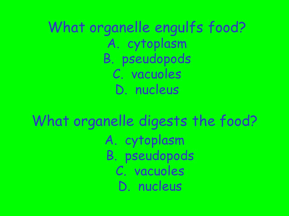 Look at the picture. Be able to answer the questions on the following slide!